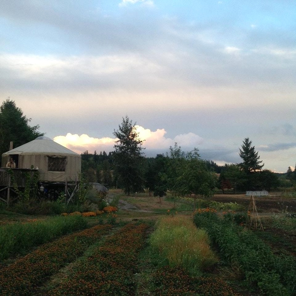 yurt garden.jpg