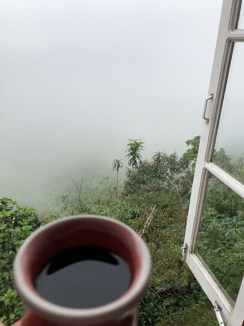 Jamaica - blue mountain coffee.jpeg