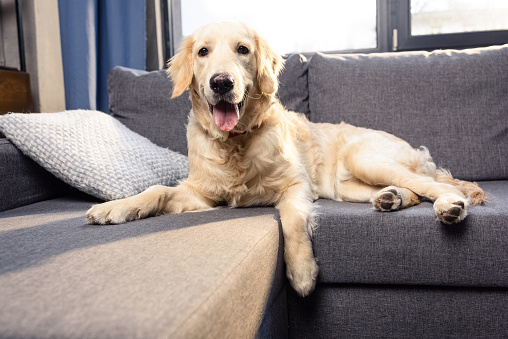 pet-friendly-cleaning-san-diego