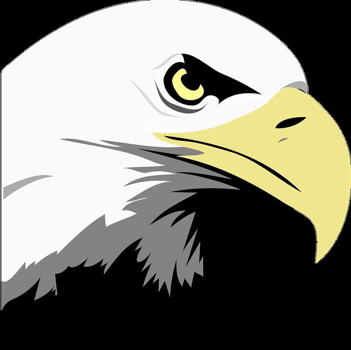 eagle-24600_960_720.png