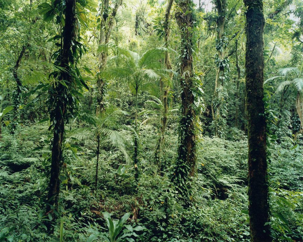 Thomas Struth, Paradise 21, Yuquehy/Brazil, 2001, 172,1 x 215,8 cm, © Thomas Struth