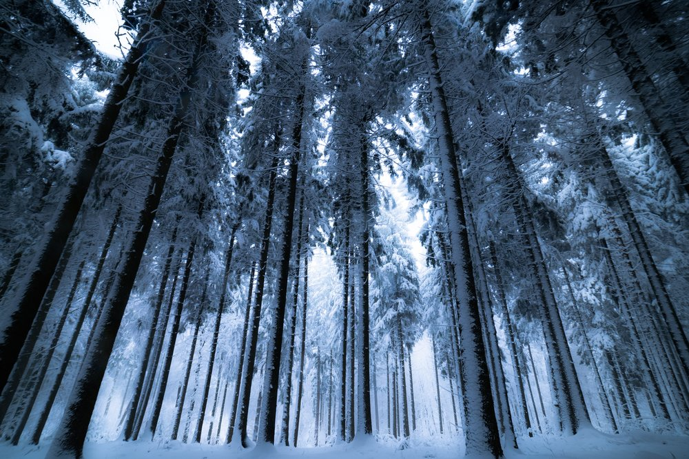 cold-environment-forest-730480.jpg
