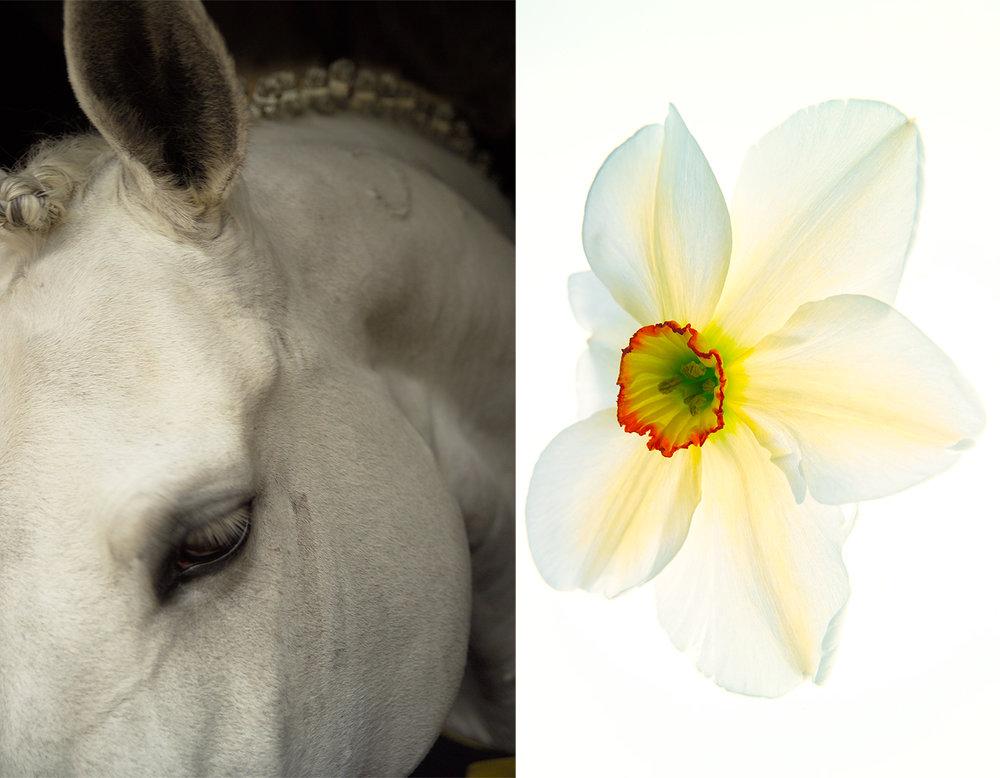 Whiteness, 2005