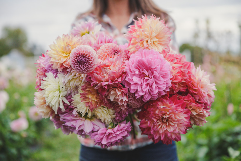 Beginner S Guide To Growing Dahlias Three Acre Farm