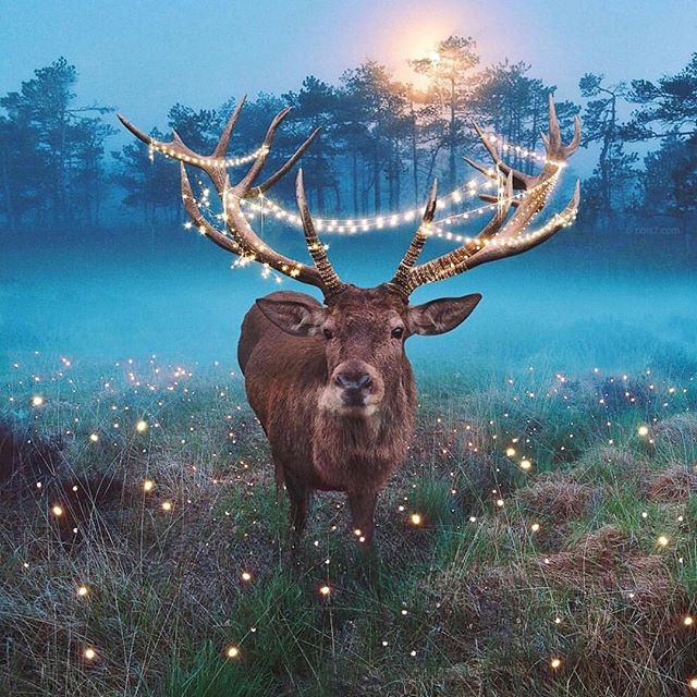 Merry Christmas to all, and to all a good night! 🦌🎄