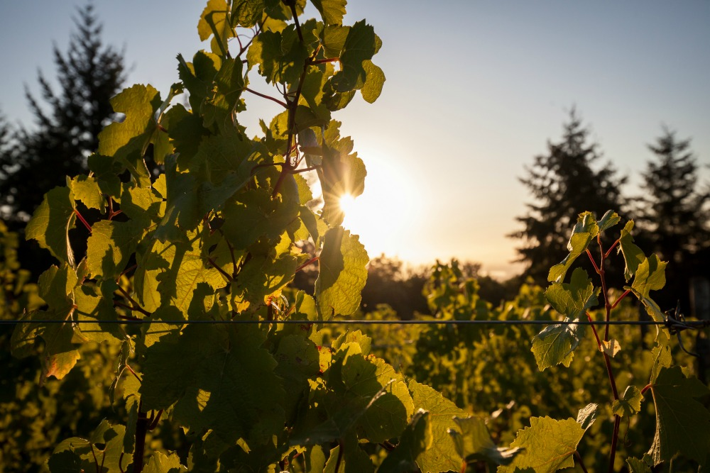 World-class wine starts in the vineyard.  -