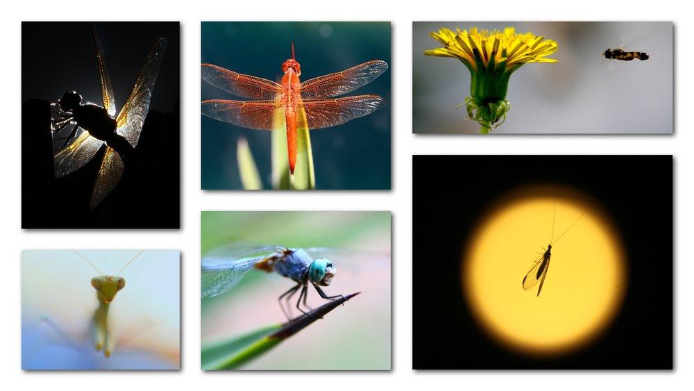 ST_BugsCollage.jpg