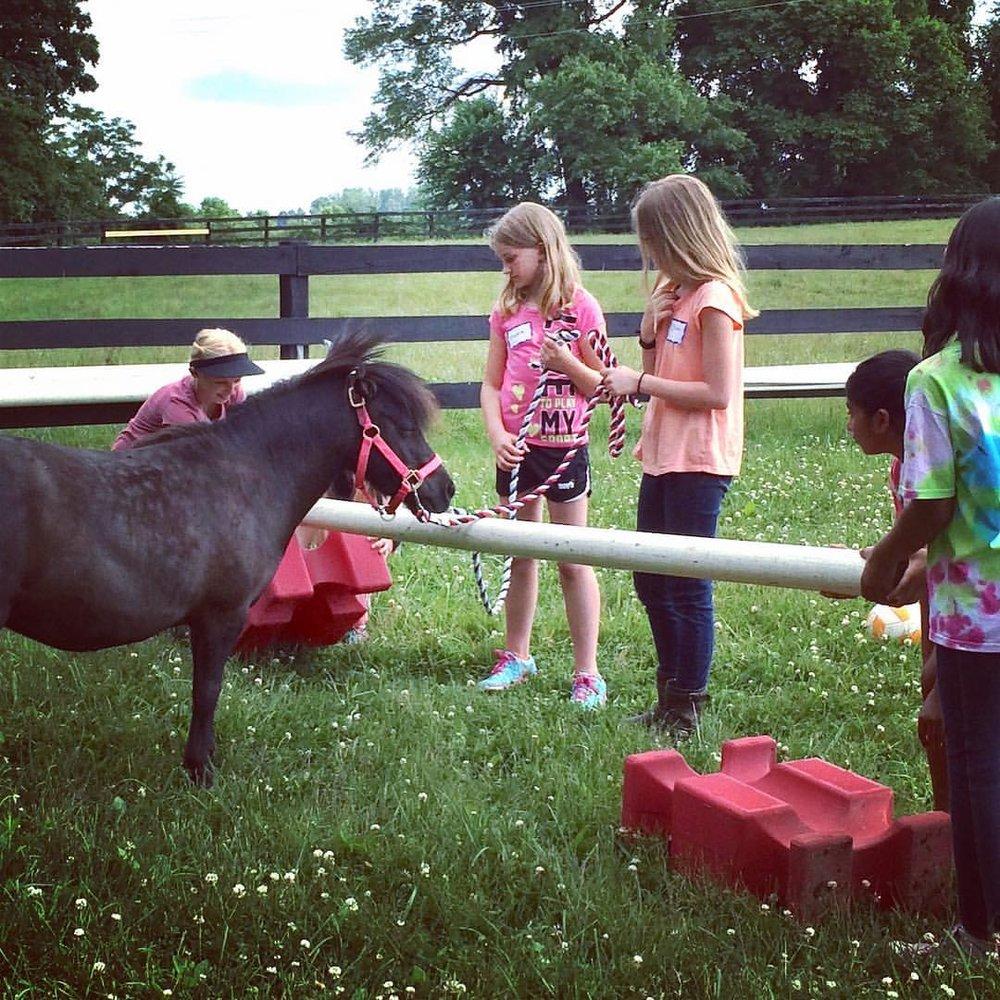 horseplay2.jpg