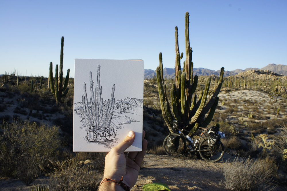 Vizcaino Biosphere Reserve, Baja California