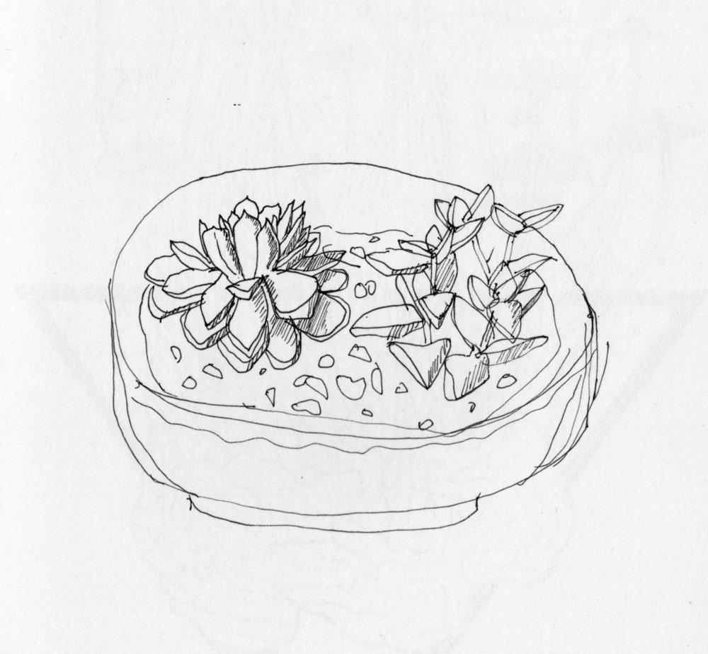 23 Succulent Study.jpg