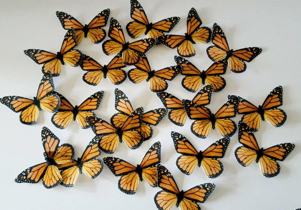 Orange monarchs.jpg