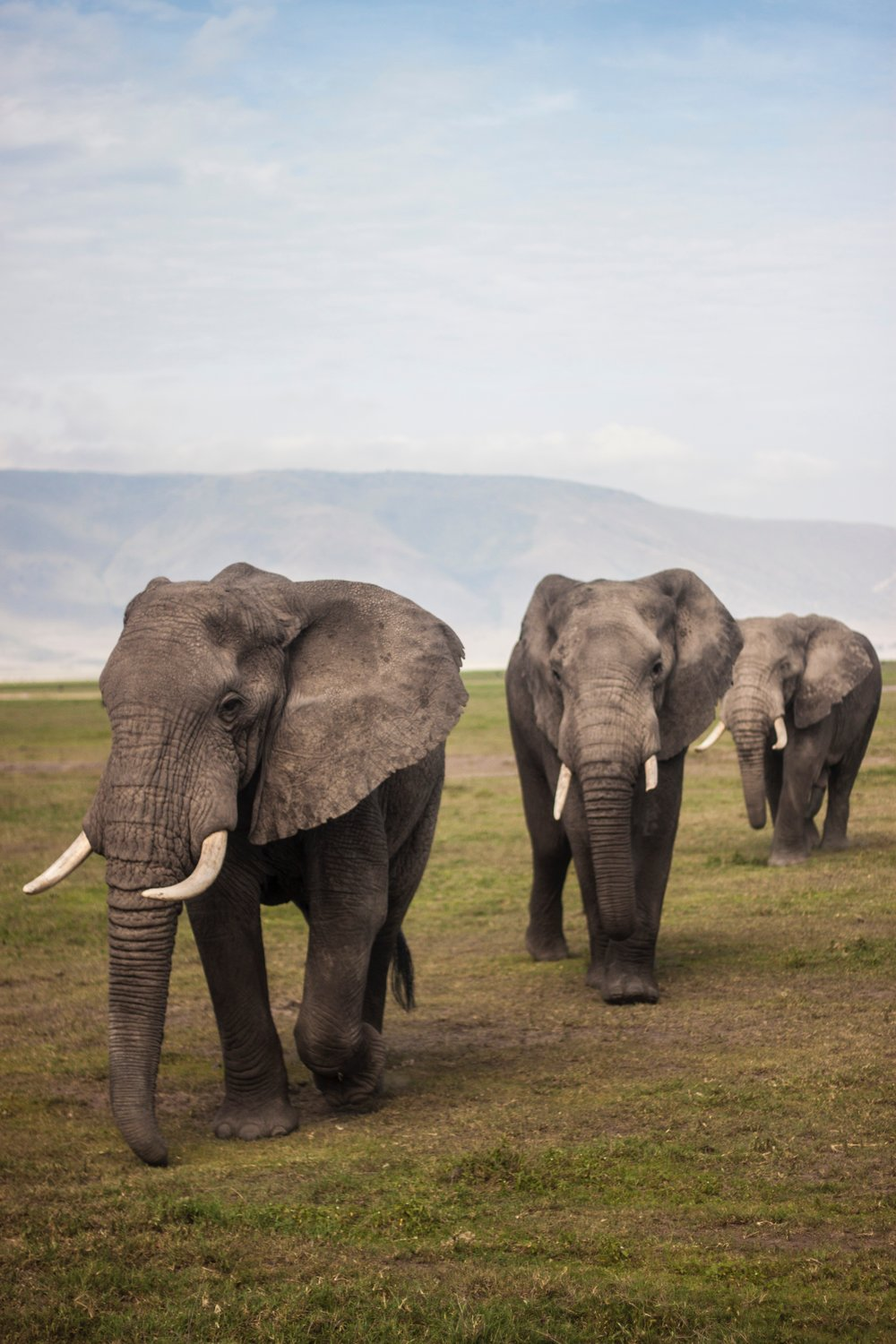 Walk with Elephants -