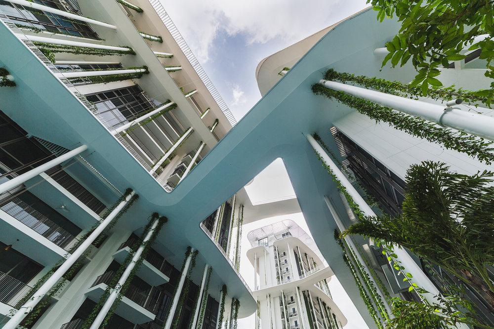 Tembusu, Singapore