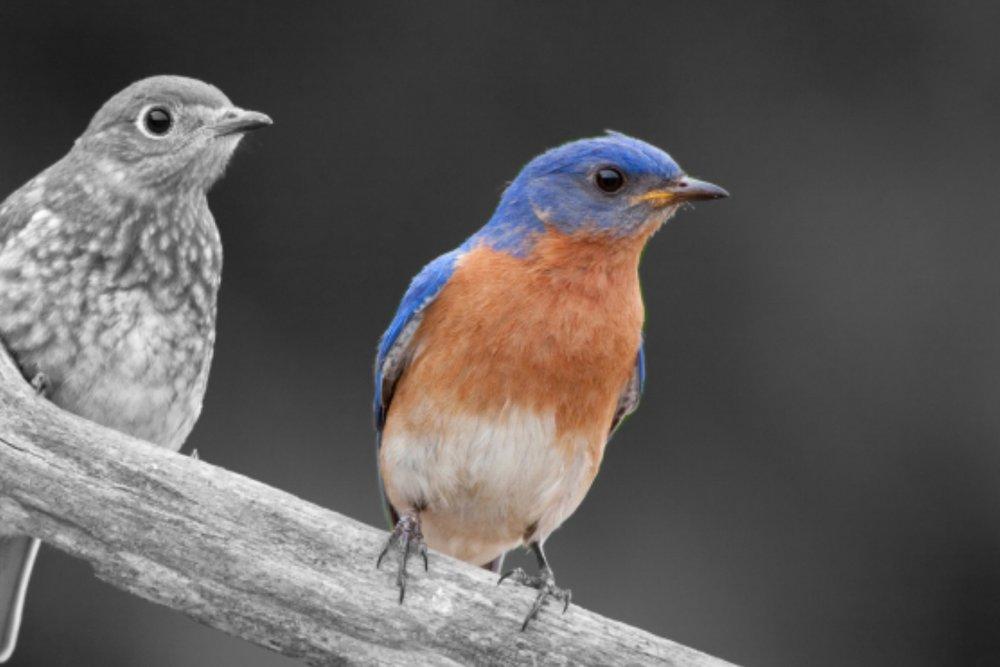 POC_Bluebird.jpg