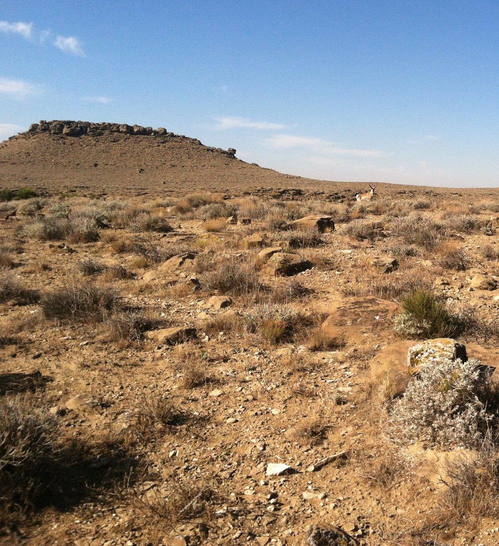 Wildlife near the Four Corners powerplant in NM