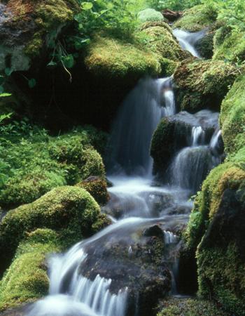 1MtRainer_waterfallVertBanner2.jpg