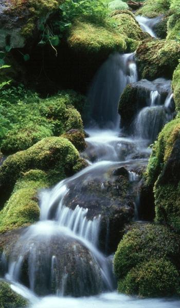 1MtRainer_waterfallVertBanner.jpg