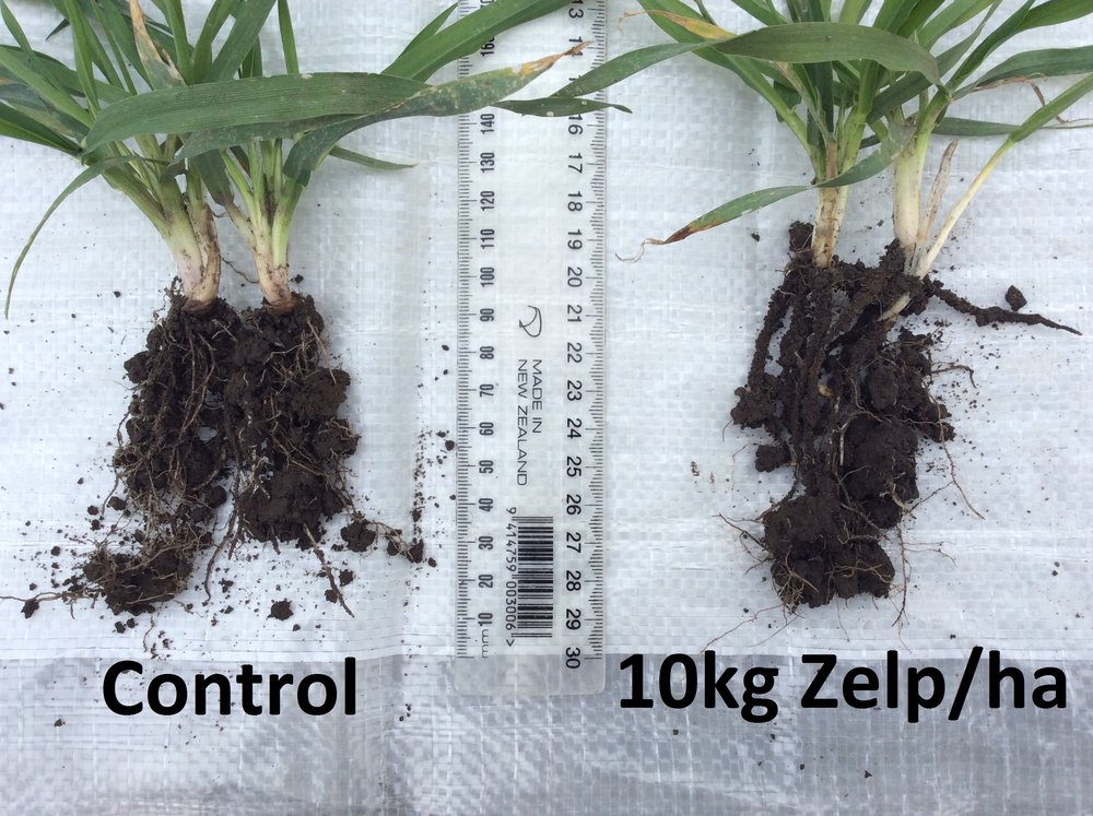 Root exudate comparison Zelp