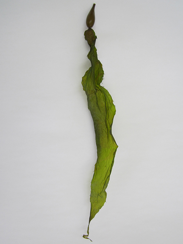 NZ_Kelp_Leaf