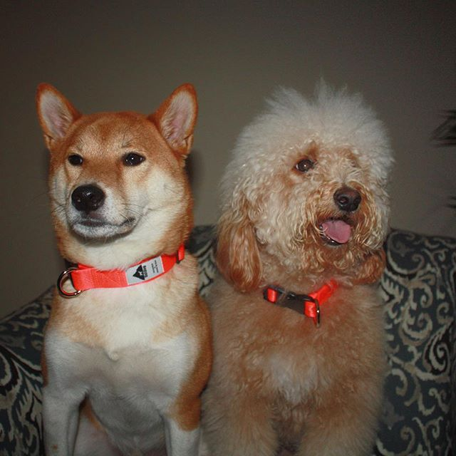 Click the link in our bio to learn more about these pawsome collars