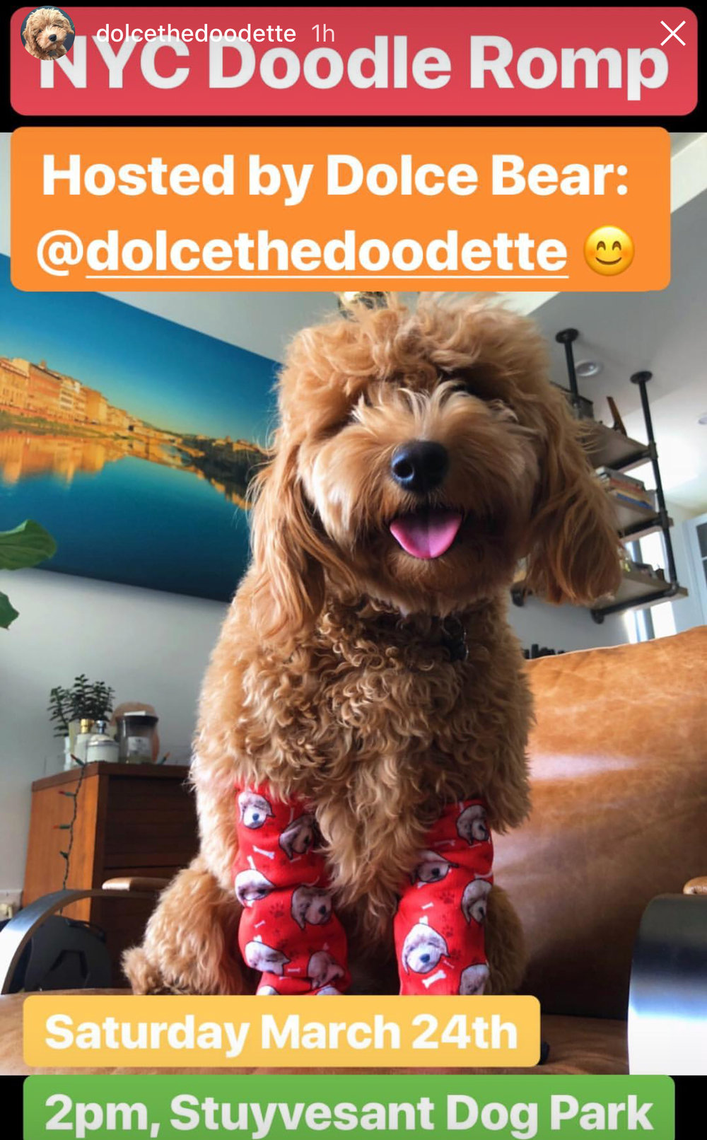 Calendar paw ty girls dolcethedoodettes nyc doodle romp will be on saturday march 24th at 2 pm at stuyvesant dog park solutioingenieria Gallery