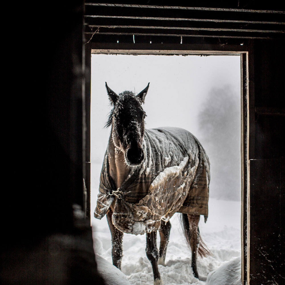horse-snowstorm-virginia|megan-witt-photo.jpg