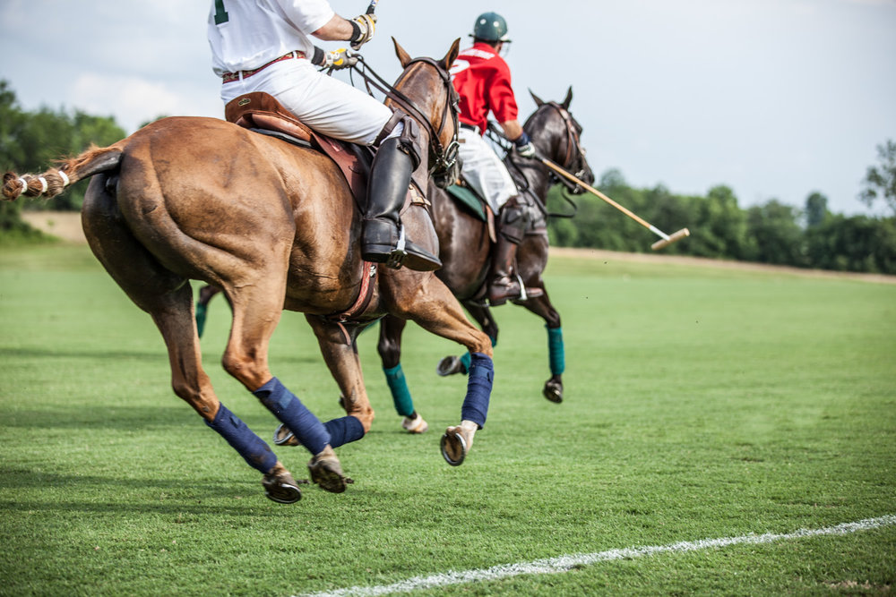 polo-ponies-virginia-chukker|megan-witt-photo.jpg
