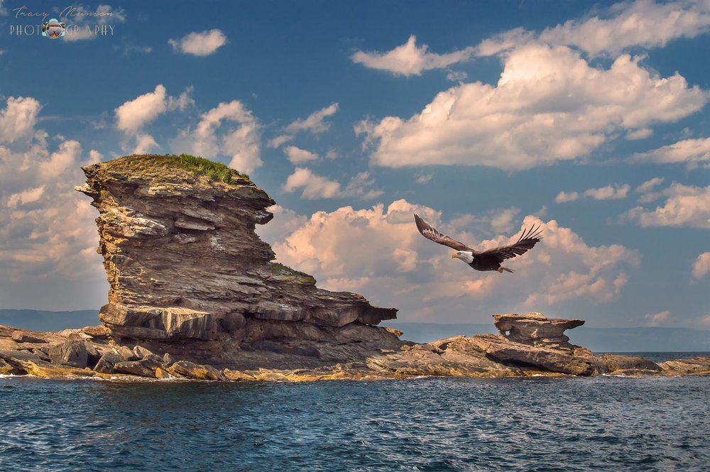 A photo of a Bald Eagle flying past a rock formation off of Cape Breton Island, by Canadian Nature Photographer, Tracy Munson.