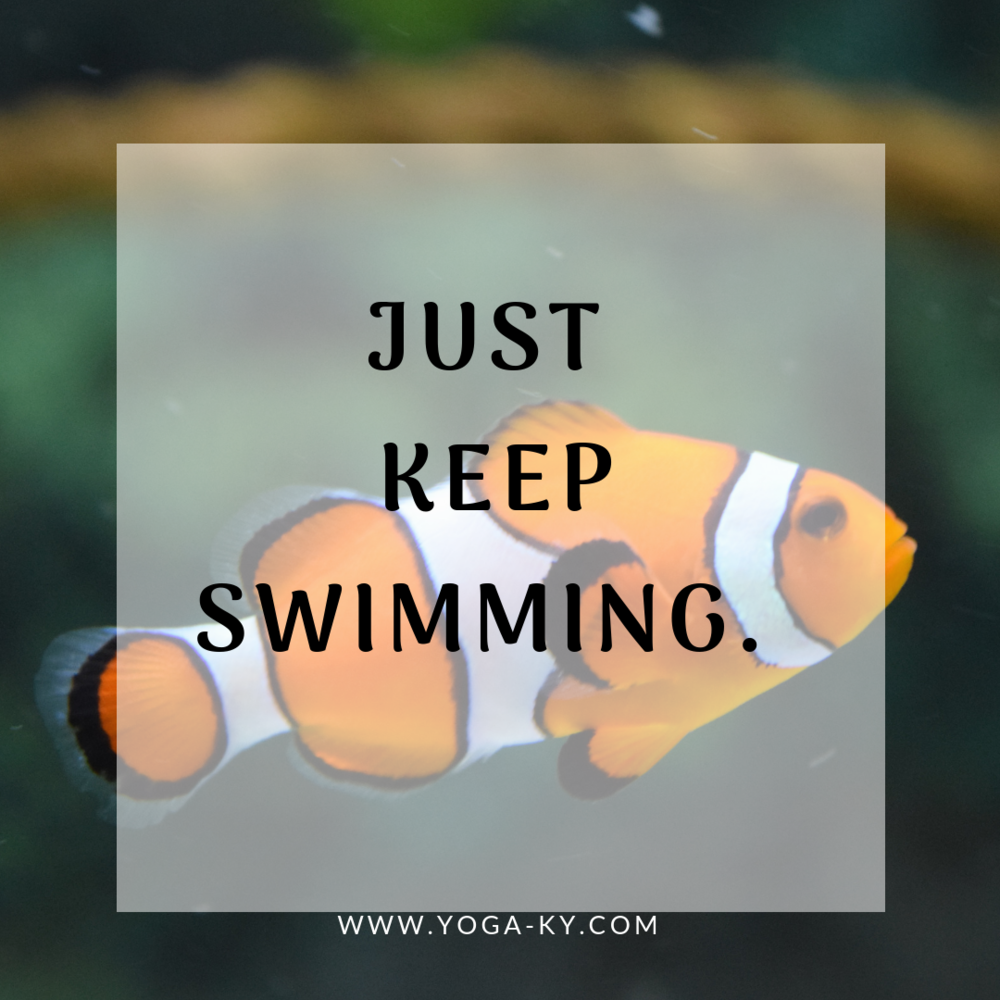 keep swimming manta quote