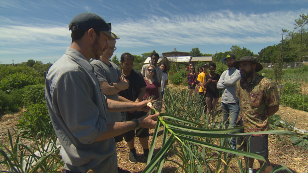 A crop of students take a tour of PACT farm at David Wilson Memorial Garden in North York to learn about fresh produce and how to utilize it while preparing Filipino cuisine. (Oliver Walters/CBC News)