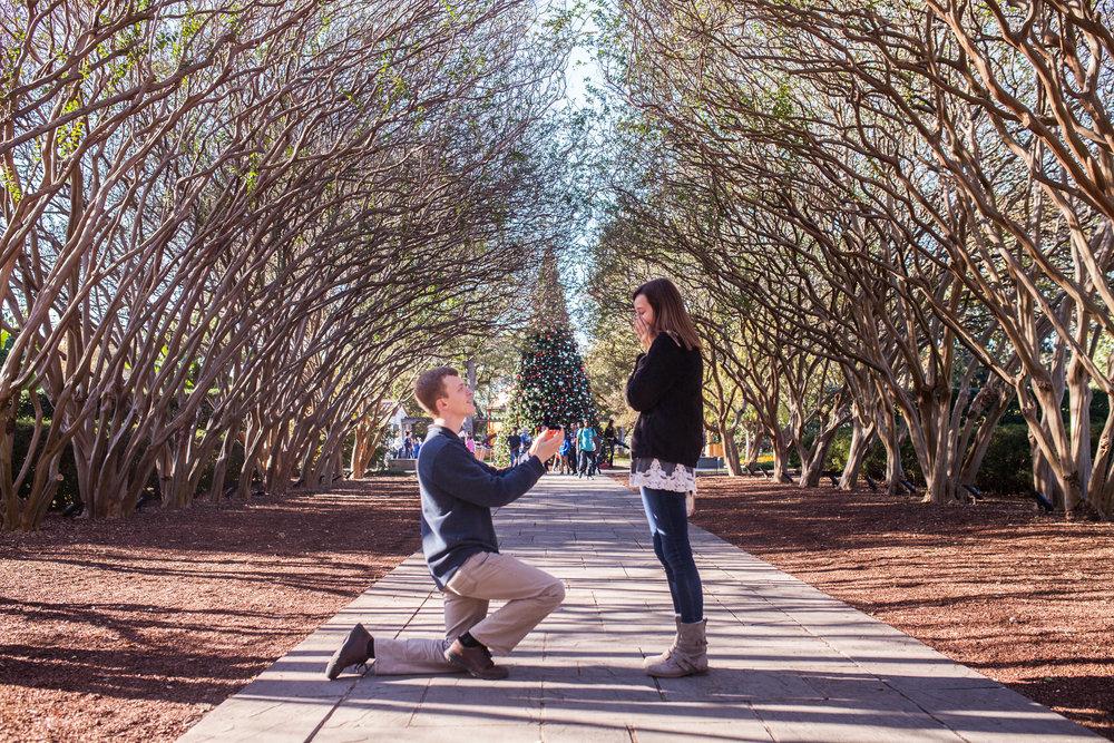 Repose Proposal Christmas Tree