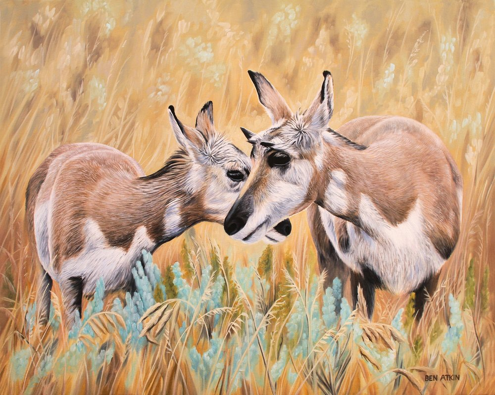 TWO PRONGHORN