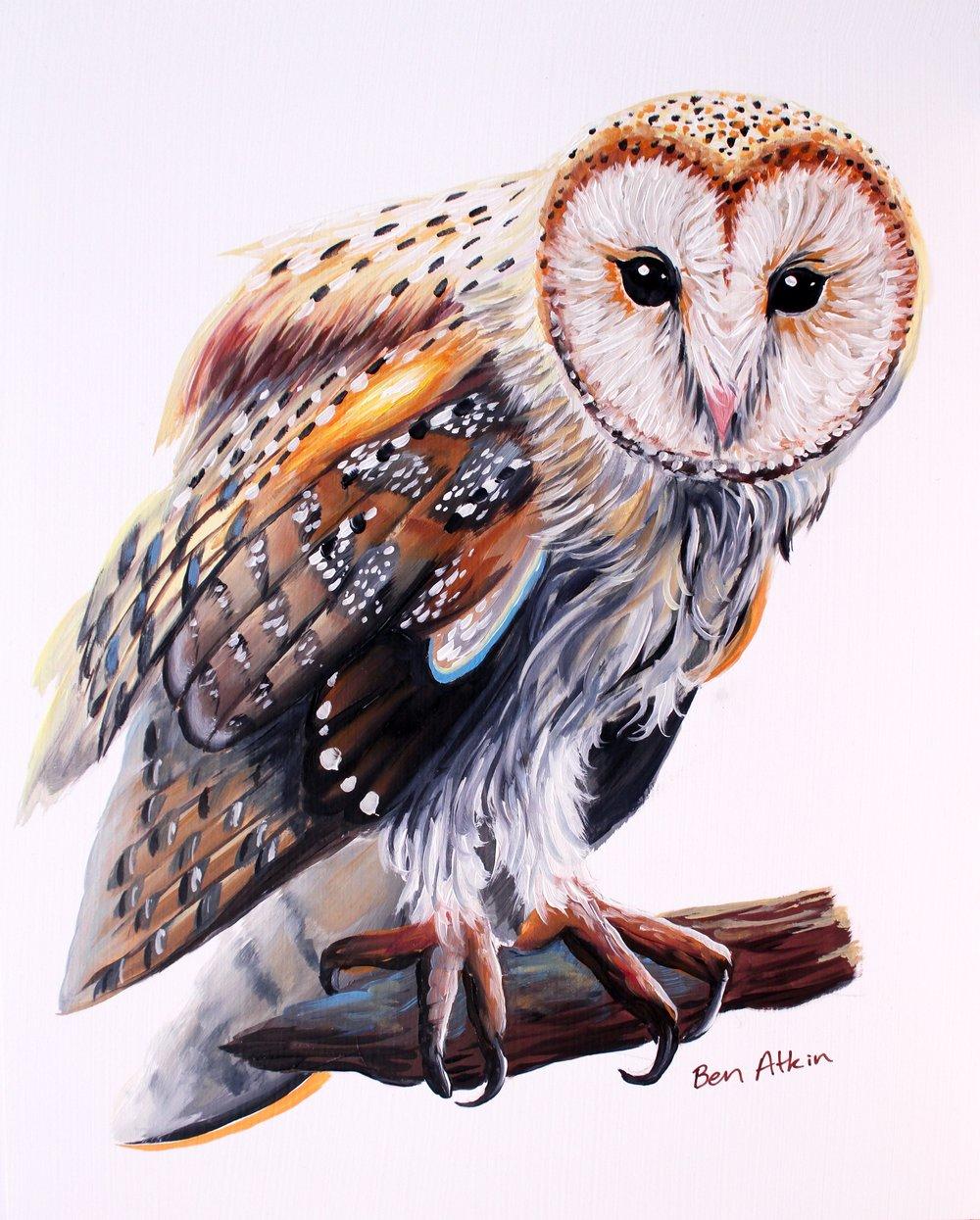 BARN OWL 8x10