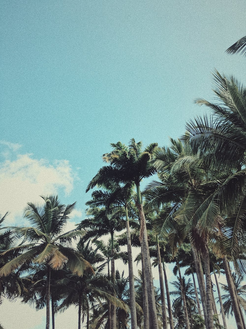 Among the Palm Trees