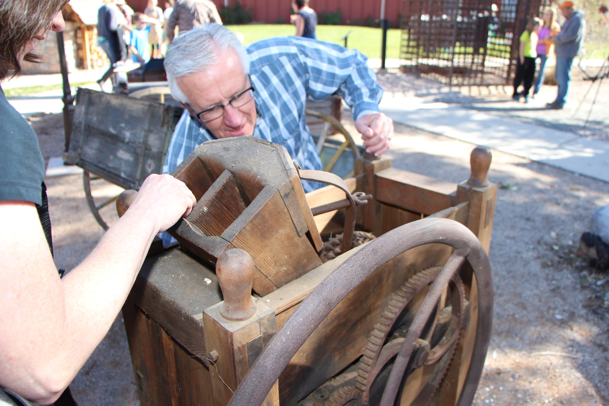 Our historic corn sheller in action.