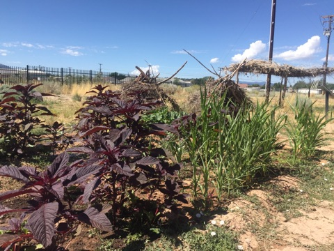 The Native Heritage Garden has been planted by anthropology students from Southern Utah University.