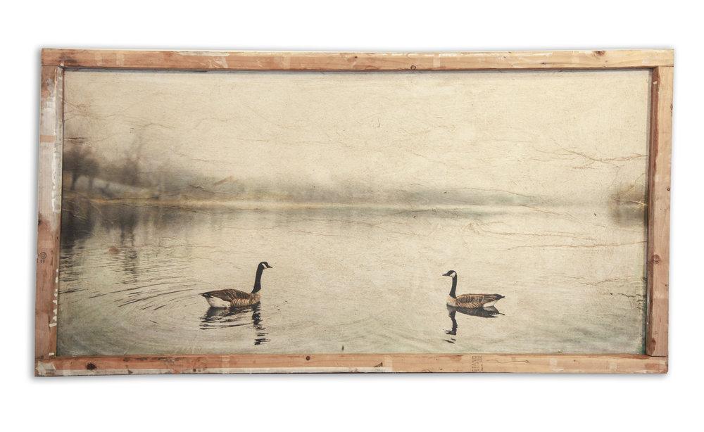Geese on Hoyt Lake