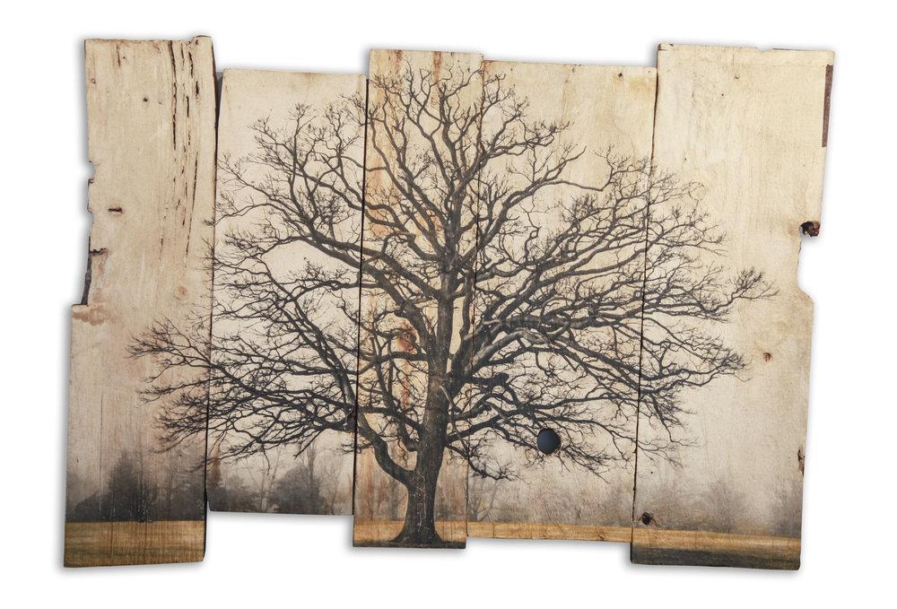 The Oak Tree - Delaware Park