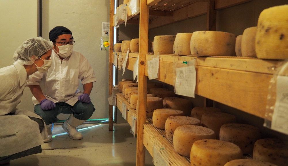 Fattoria Bio Cheeseroom