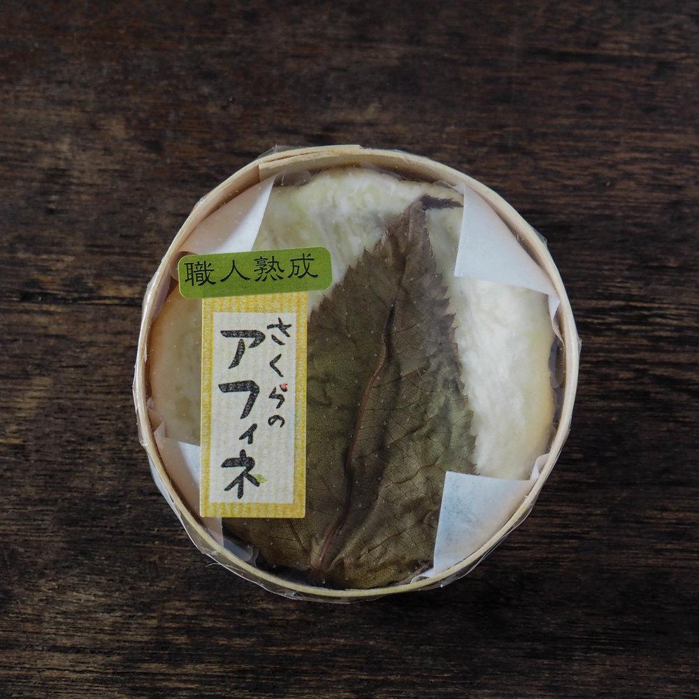 Sakura affine - Kyodogakusha
