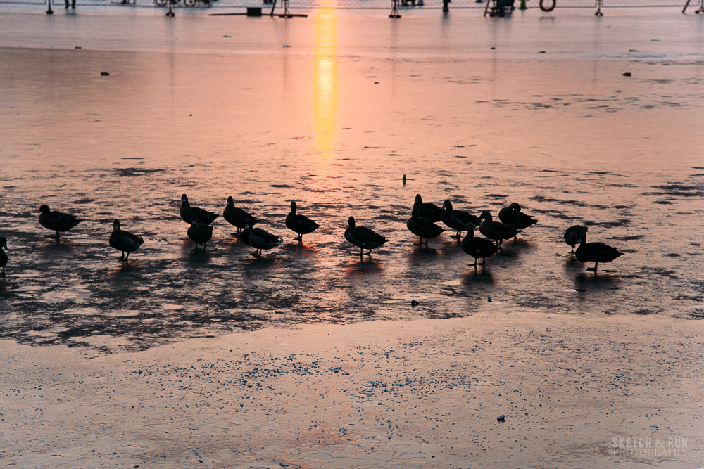 nanluoguxiang, beijing, china, sketch and run, travel, sunset, ducks