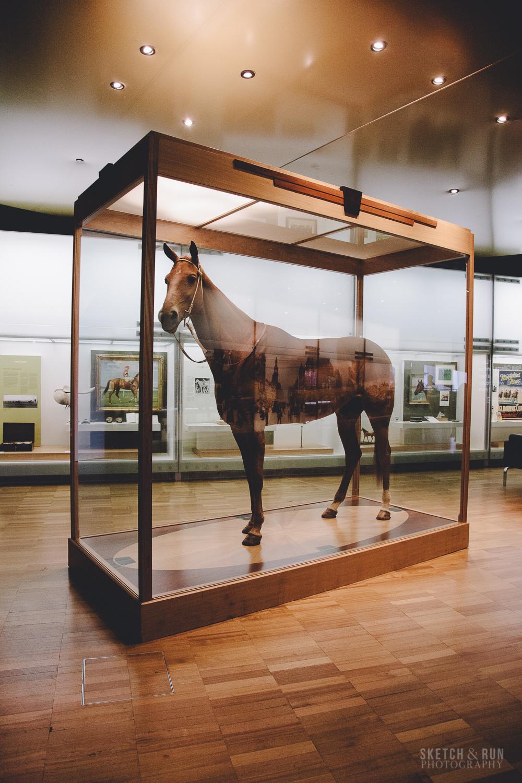 melbourne museum, display, melbourne, australia, phar lap