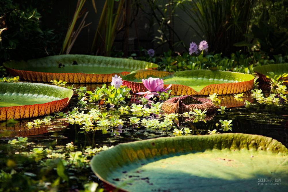 botanicgardens-7.jpg