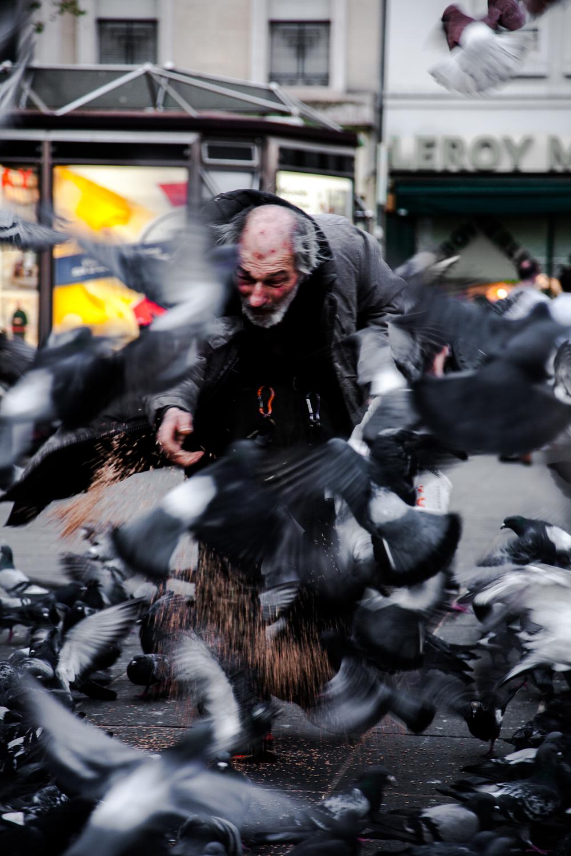 pigeonman-12.png