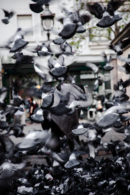 pigeonman-8.png