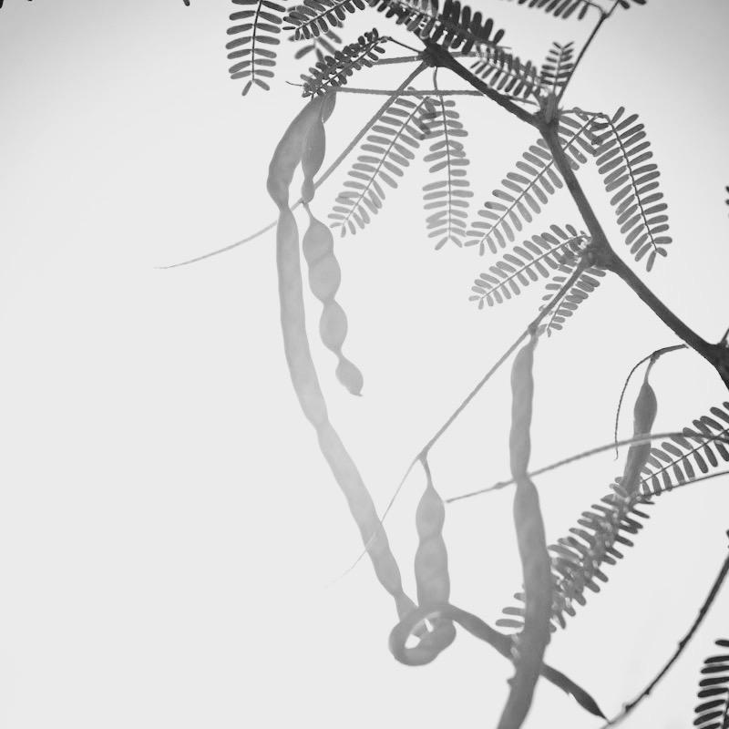 Karoo-plants-2 (1).jpg