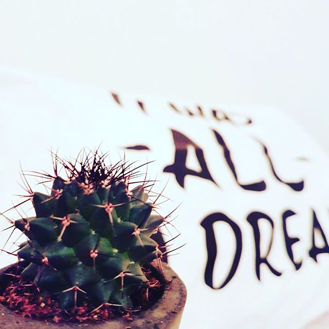 Actually very pleased the holidays are over! 🌵 My absolutely fav gift this year 🌵  #itwasalladream #cactus #gifts #newyear #flowersofinstagram #vscocam #vscogood_ #homedecor #homegoods #geofleur