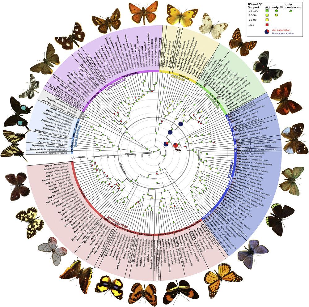 Phylogeny.jpg