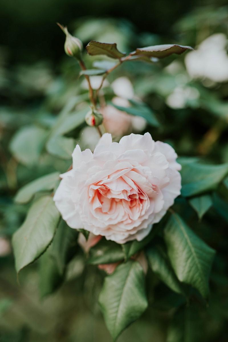 sigridsminde-garden-wedding_4443.jpg