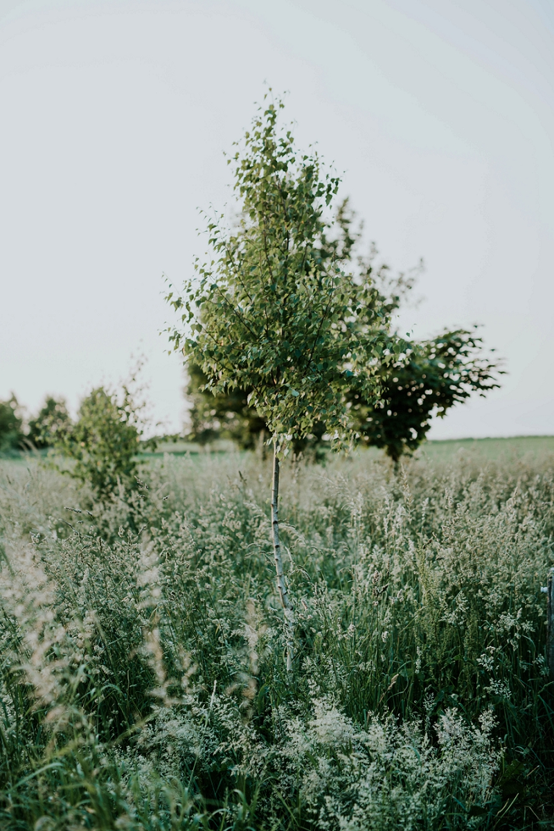 sigridsminde-garden-wedding_4446.jpg